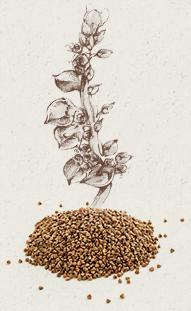 ble-farine-graines-sarrasin