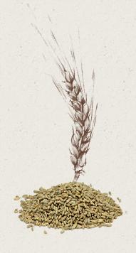 bles-farine-graines-seigle